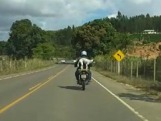 Vídeo mostra cachorro em garupa de moto sem proteção na ES-137 (Foto: VC no ESTV)