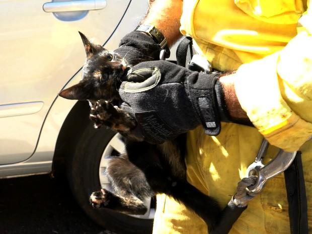 Sargento disse que animal estava agressivo e aconselhou família  não adotá-lo (Foto: Alexandre Sá/EPTV)