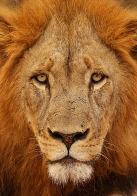 Leão Imposto de renda (Foto: Getty Images)