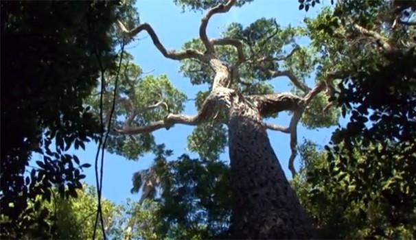 Meu Paraná Cinturão Verde Cianorte (Foto: Reprodução/ RPC TV)