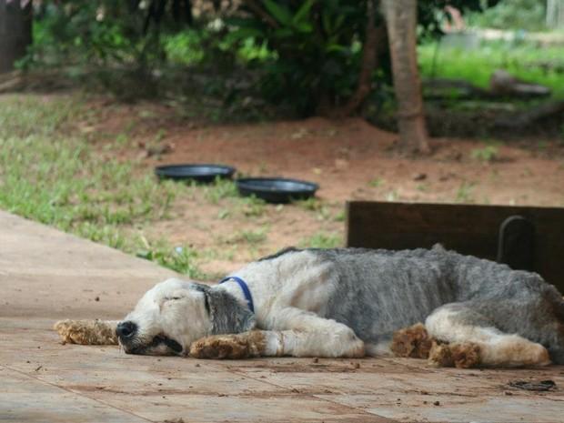 Cães foram encontrados em situação de total abandono (Foto: Leandra Marquezini)