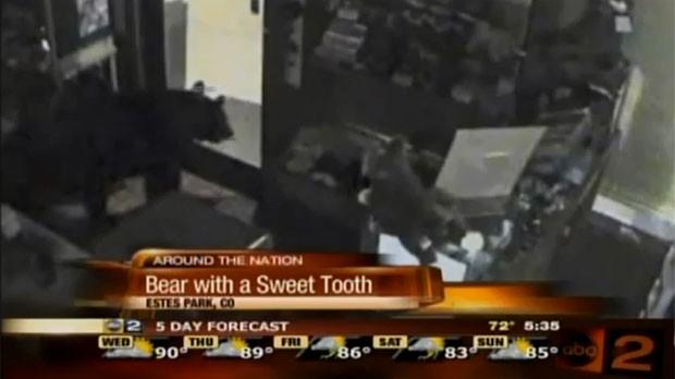 Urso foi flagrado passeando em loja de doces. (Foto: Reprodução)