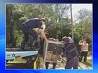 Onça ferida é resgatada às margens de rodovia em Itatiba