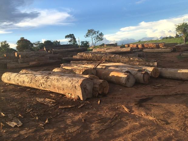 Madeiras ilegais são retiradas de área de reserva indígena, segundo apurou o Ibama (Foto: Assessoria/Ibama/Divulgação)