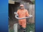 Jiboia de 1,5 m é capturada no galpão de casa em Ariquemes, RO