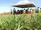 Dia de campo sobre integração lavoura-pecuária será sábado em MT