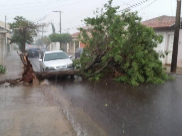 Em Jaú, teve queda de árvores durante a chuva  (Foto: Giva Bernini/ Arquivo pessoal )