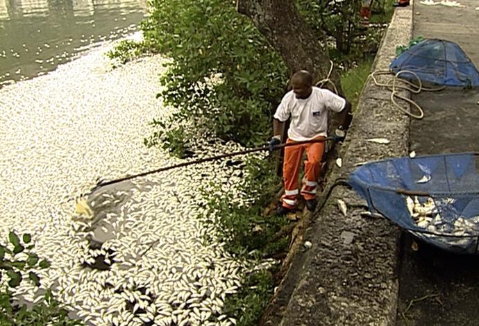 Mortandade de peixes na Lagoa Rodrigo de Freitas, no Rio de Janeiro (Foto: Reprodução SporTV)