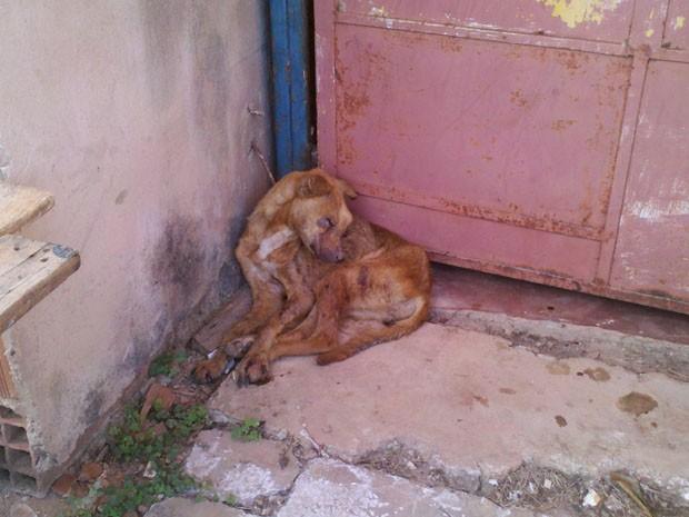 Cadela foi gravemente ferida e abandonada por dono, na Vila Rabelo II, no Distrito Federal, contam vizinhos (Foto: Rafaela Céo/G1)