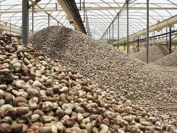 Além da seca, mercado de castanha também sofre impacto com a crise financeira (Foto: Anderson Barbosa/G1)