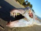 Lista reúne 'sanguessuga gigante' e mais criaturas esquisitas