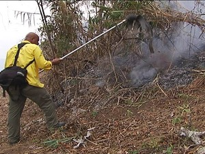 Brigadistas trabalham no combate às chamas (Foto: Reprodução/Inter TV dos Vales)