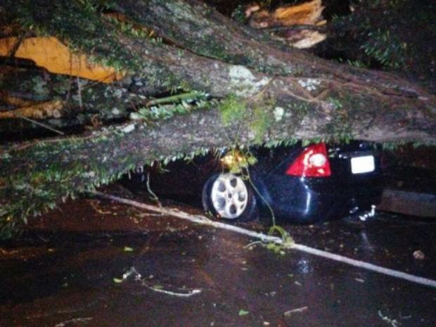 Em Cascavel, uma árvore caiu em um carro. O motorista não ficou ferido.  (Foto: Coordenadoria Estadual de Proteção e Defesa Civil do Paraná)