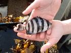 Peixes sobrevivem a viagem de 8 mil km em porão de navio após tsunami