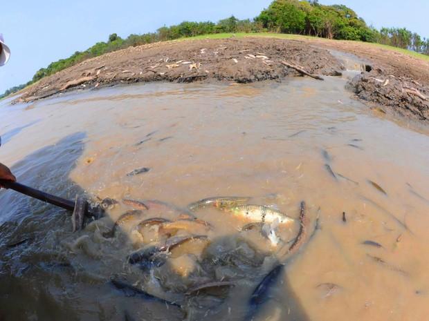 Pesca é a principal fonte de alimento e renda das famílias de Manaquiri (Foto: Chico Batata)