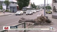 G1 no Bom Dia Rio: quatro dias após temporal, Ilha ainda tem árvores caídas