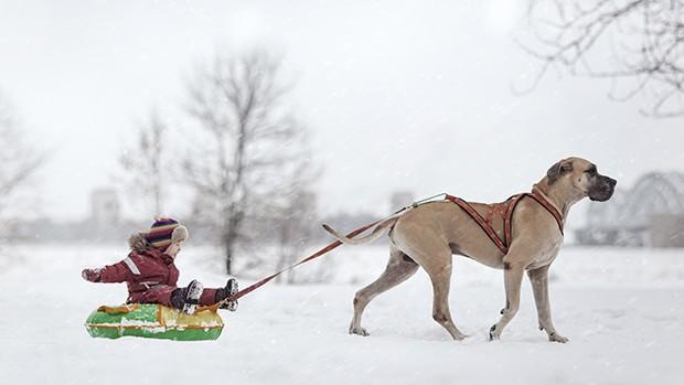 ensaio-criancas-cachorros-fotos-fotografo-fotografia-1 (Foto: Andy Seliverstoff)