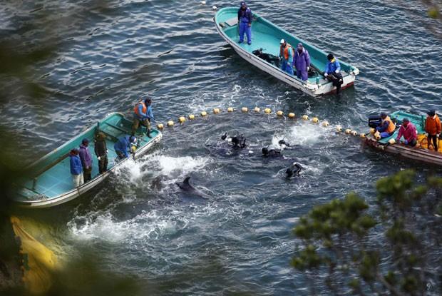 Imagem divulgada pela Reuters mostra pescadores capturando golfinhos no vilarejo de Taiji, no Japão. Governo se posicionou favorável à prática, considerada tradicional (Foto: Adrian Mylne/Reuters)