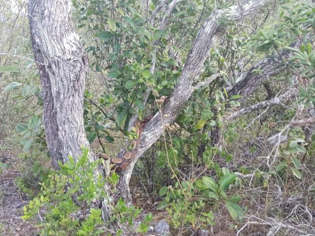 Animal foi solto no Parque Estadual de Sete Passagens, em Miguel Calmon. (Foto: Divulgação / Inema)