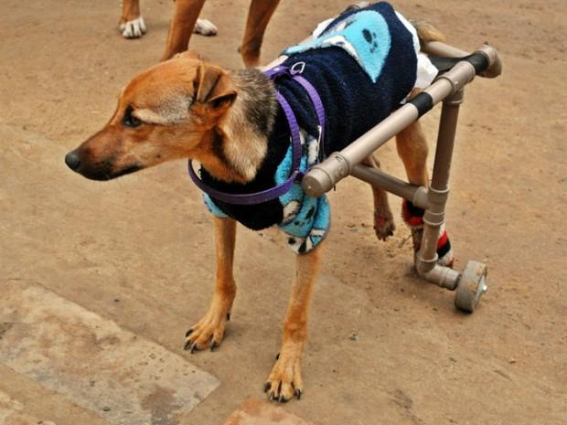 Bernardo anda com a ajuda da cadeira de rodas, usa fraldas e precisa de cuidados durante o dia (Foto: Divulgação/ ASPA Itu)