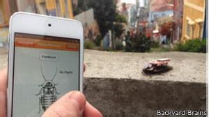 O 'inseto ciborgue' é controlado por meio de dispositivos como celulares (Foto: BBC)