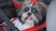 Veja quais cuidados devem ser tomados antes de viajar com os pets (Reprodução/TV TEM)