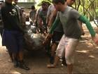 Cativeiro de peixes-boi em Alagoas recebe quatro novos animais de PE