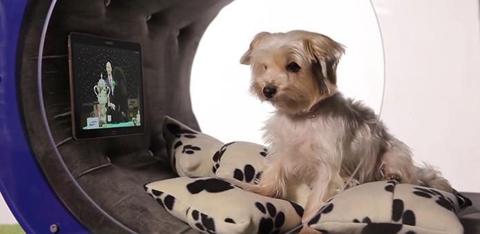 Design interno da casinha de cachorro da Samsung (Foto: Divulgação/Samsung)