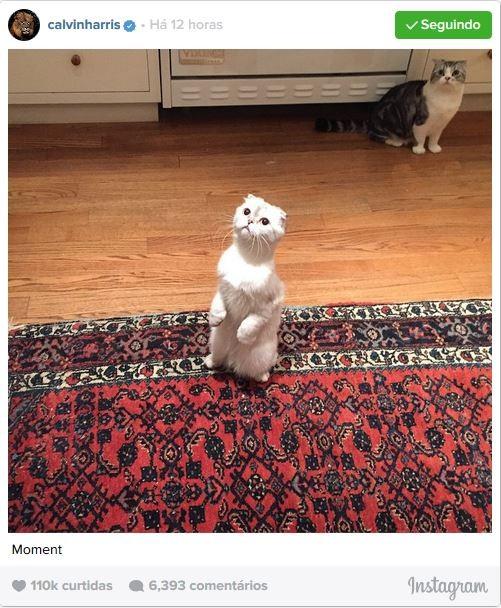 Calvin Harris mostra os gatos de Taylor Swift (Foto: Instagram / Reprodução)