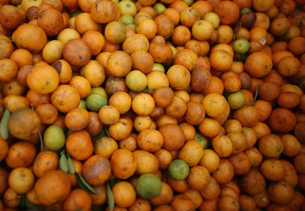 laranja, greening, agronegócio,  (Foto: Joe Raedle/Getty Images)