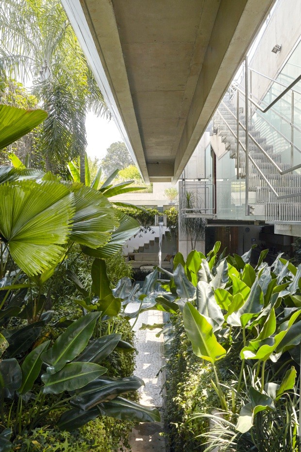 Térreo. O casamento perfeito entre a arquitetura e o paisagismo é evidente nesta casa. A estrutura metálica da escada permite que a iluminação chegue até os filodendros-rasteiros, barbas-de-serpente, heras-estrelas e palmeiras-leque (Foto: Victor Affaro / Editora Globo)