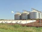 Agricultores de MS seguram venda do milho e sofrem para estocar