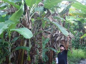 Aged realizou fiscalizações por várias plantações (Foto: Divulgação)