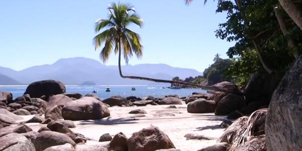Um dos principais cartões postais da reserva é o coqueiro deitado (Foto: Reprodução Rio Sul Revista)