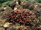 Biopalma, da Vale, inaugura no Pará primeira usina de óleo de palma
