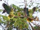 Confira dicas do G1 para observar pássaros em Manaus e arredores