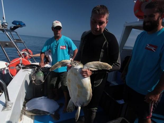 Tartarugas são devolvidas ao mar após tratamento em Santos, SP (Foto: Francisco Arrais/Prefeitura de Santos)