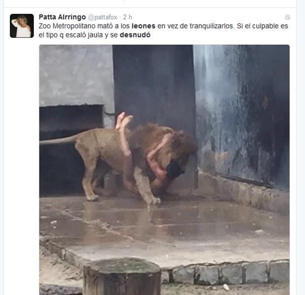 Homem nu invadiu jaula de leões no Chile (Foto: Reprodução / Twiiter / Patta Alrringo)