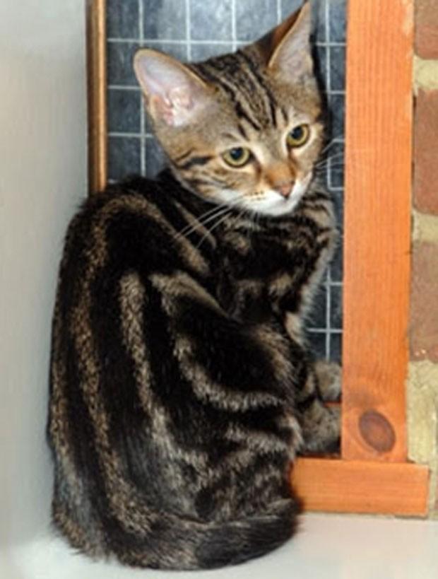 Gatinho sobreviveu a uma viagem de mais de 3 mil quilômetros entre Turquia e Inglaterra. (Foto: Divulgação/cats.org.uk)