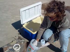 Professora da UFSC colhe amostras de crustáceos (Foto: Haroldo Elias/ Divulgação)