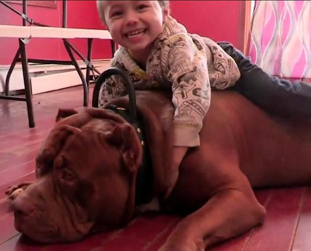 Criança de 3 anos brinca com o cachorro gigante