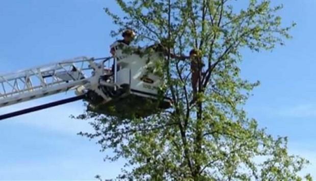 Menina sobe em árvore nos EUA, não consegue descer e é resgatada (Foto: Reprodução/ABC News)