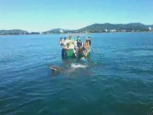 Pescadores conseguiram retirar animal que estava enrolado (Foto: Reprodução/RBS TV)