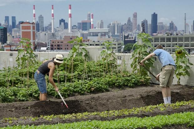 John Castel (à direita) e outra voluntária preparam com ancinhos um novo canteiro da horta (Foto: Haroldo Castro/ÉPOCA)