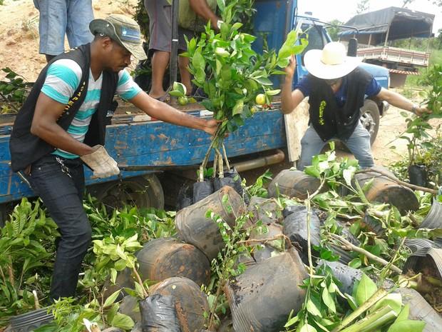 Mais de mil mudas de plantas frutíferas foram destruídas (Foto: Divulgação/Adapec)