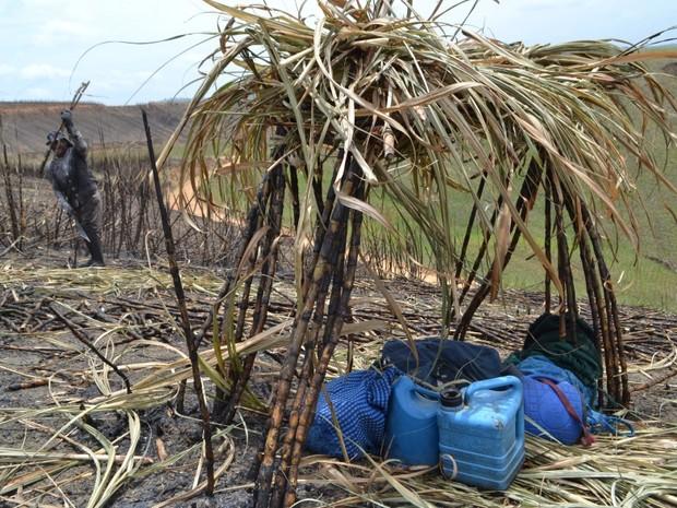Pesquisa da UFSCar traçou perfil de cortadores de cana-de-açúcar (Foto: Allan Queiroz/Arquivo pessoal)
