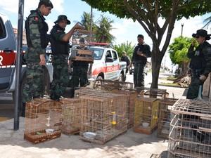 Em uma resudência havia cinco aves criadas em condições inadequadas, segundo o comandante da Polícia Ambiental (Foto: Walter Paparazzo/G1)