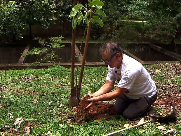 Seu Hélio plantou sozinho 18 mil árvores em São Paulo (Foto: Reprodução Globo Repórter)