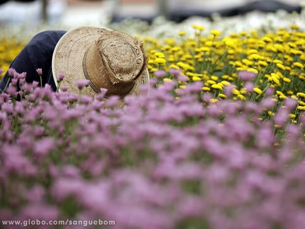 Os campos floridos fazem o espetáculo da natureza (Foto: Sangue Bom/TV Globo)