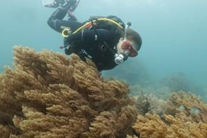 Submerso (Foto: Divulgao)
